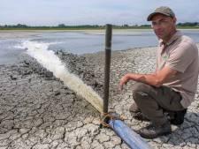Water voor de poel: dure broedzorg voor 26 kluutkuikens in bar droog voorjaar