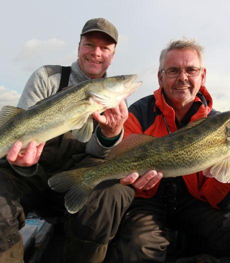 Visverbod bij Haringvlietdam moet trekvis de ruimte geven