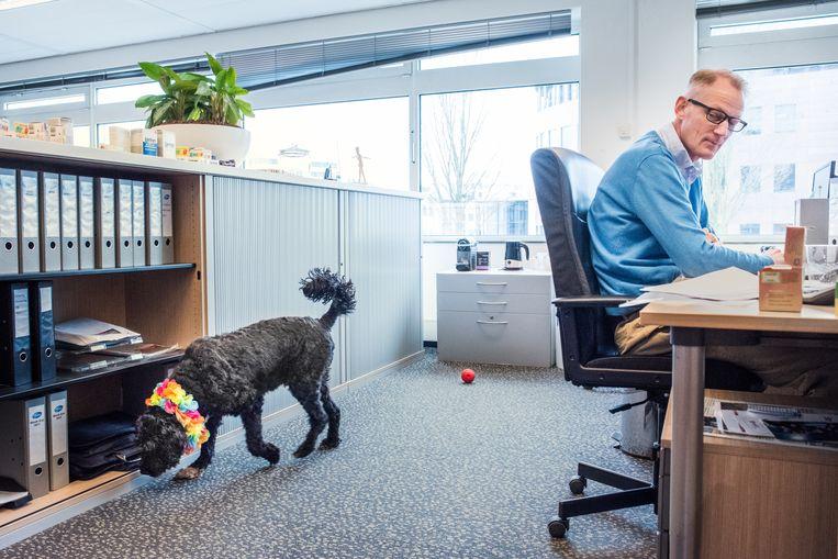Chapstick, de kantoorhond bij Pfizer in Capelle aan den IJssel. Beeld Simon Lenskens