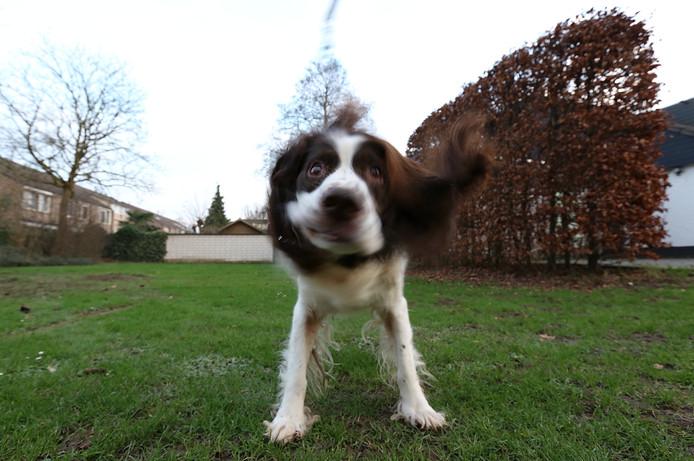 Hond Freddy uit Huissen.