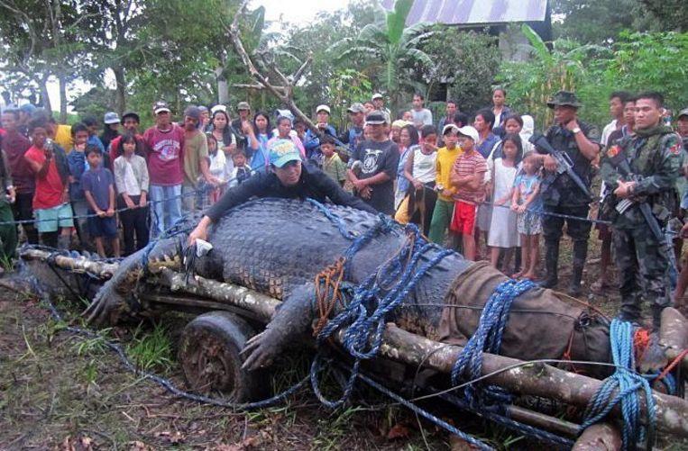 De grootste krokodil die in de Filipijnen werd gevonden, was 6,17 meter lang.