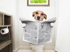 Ruzie om hondennaam Max leidt tot werkstraf