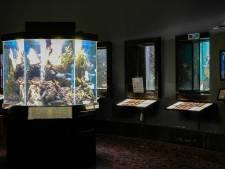 Aquarium, insectarium, Maison de la Science, les musées universitaires liégeois à nouveau ouverts