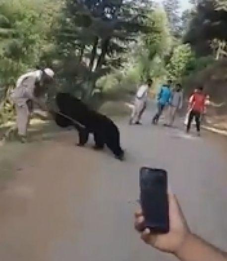 Ils marchent près d'un ours sauvage, l'animal attaque