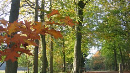 Stadsbestuur vraagt parken en bossen te vermijden door mogelijke rukwinden