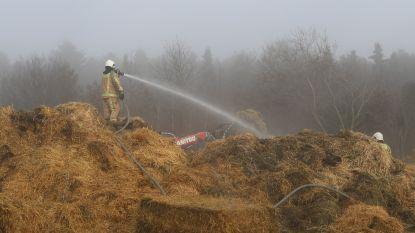 """Stalbrand eist leven van zes kalfjes, ook enkele runderen lopen brandwonden op: """"Zo gewerkt voor onze toekomst, nu weer werken voor wat er was"""""""