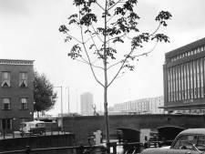 Wie herkent dit stukje Rotterdam achter het bescheiden boompje?