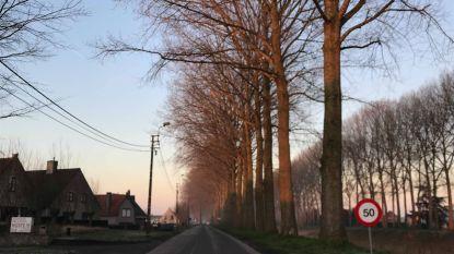 Bomen langs Moershoofdeweg worden gerooid