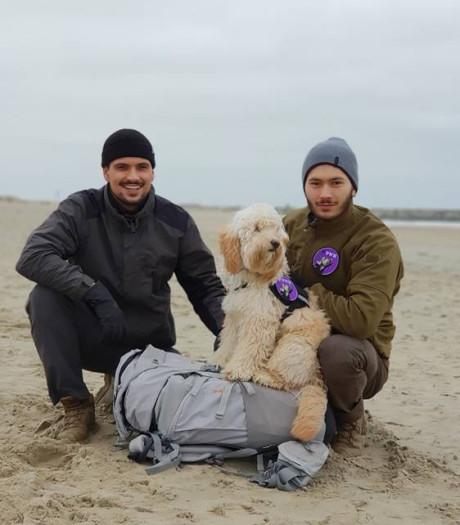 Marechaussees lopen honderd kilometer over strand voor onderzoek naar hulphonden bij PTSS