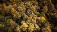 """Elke klimaatbetoger in Brussel krijgt stuk bos: """"Op 2 december eisen wij een toekomstplan"""""""