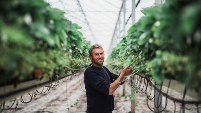 """Fruitboer leidt asielzoekers op tot plukkers: """"De meesten hebben geen ervaring in de landbouwsector"""""""