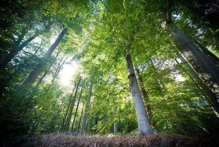 Het stukje groen ligt tussen de Molenbeekvallei en het Zoniënwoud (foto).