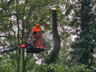 Park van Mesen twee weken gesloten voor onderhoud bomen