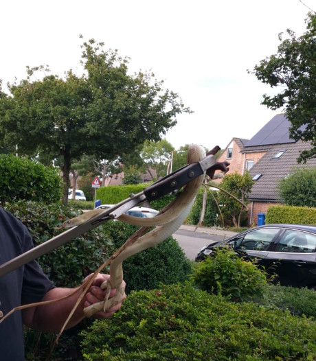 Slang na maand vrijheid gevangen in Zwolle-Zuid