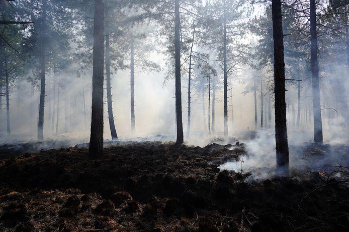 In de Chaamse bossen brak opnieuw brand uit.
