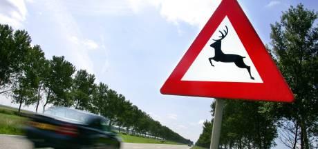 Ree alleen bij drukke wegen afschieten, dit jaar veel meer vossen geschoten