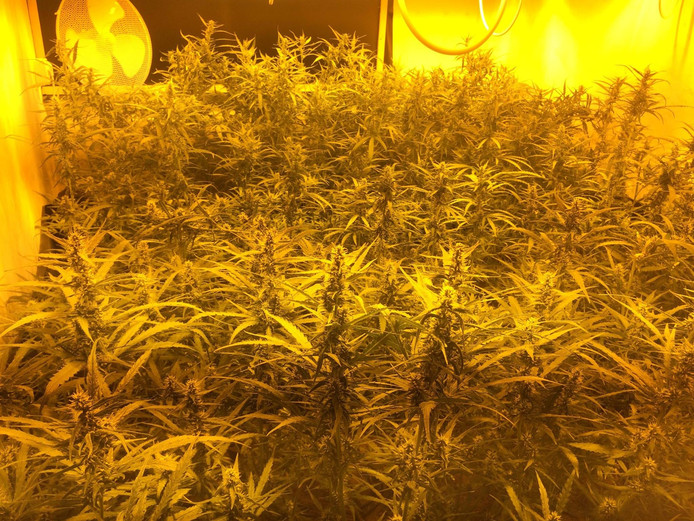 In de kwekerij stonden 443 planten.