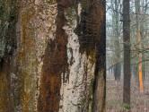 Romantiek en abstracte kunst in het winterbos