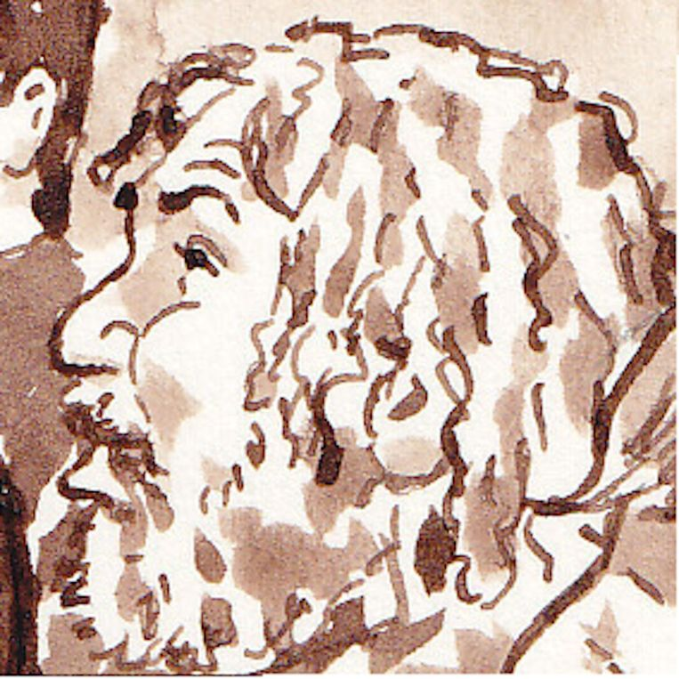 Siegfried S. Beeld anp