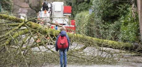 Storm velt bomen in regio