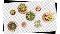 SOS zwarte vingers: dit is de juiste manier om je planten water te geven (en ze weer tot leven te wekken als ze kapot zijn)