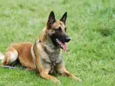 Le chien d'Angélique échappe à la mort après s'être coincé dans un piège à renard
