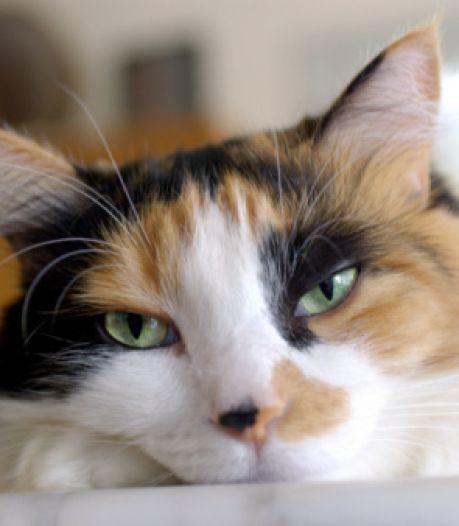 Grâce à cette application, vous allez enfin comprendre ce que votre chat veut vous dire