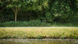 Hooikoortsalarm: extreem veel berkenpollen in de lucht