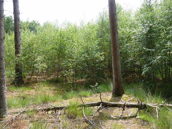 Door de mens gemaakte open plekken in het bos groeien al snel weer dicht zonder dat de beoogde variatie is bereikt.