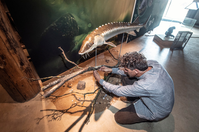 Een steur op ware grootte, onderdeel van de expositie 'Waal onder' in de Bastei.