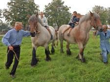 Eerbetoon aan paardenmeester Pol van de Vijver in documentaire