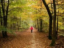 Gemeentebelang Nunspeet: houd paden in bossen open voor publiek