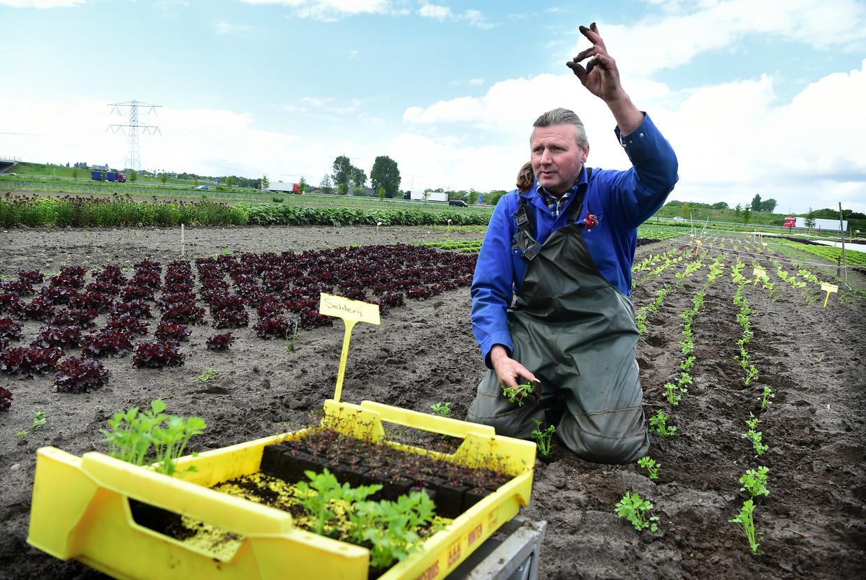 Peet de Krom poot plantjes. Zijn biologisch-dynamisch  tuinbouwbedrijf de Kromme Lepel pacht van Stichting Grondbeheer. Beeld Marcel van den Bergh