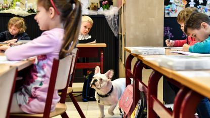 """Juffen Oscar Romerocollege overtuigd: """"Hond in de klas heeft alleen maar voordelen"""""""