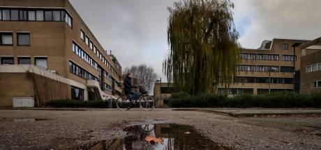 Weer roep om behoud treurwilg achter stadhuis Helmond