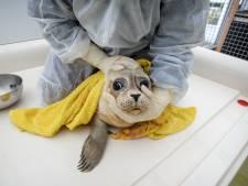 Minister: Handen af van zieke of gestrande zeehonden