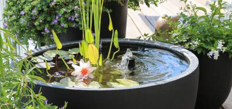 Hoog en droog in je groene oase: zo wordt je dakterras wél gezellig