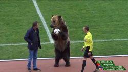 """Echte beer ingezet als mascotte voor voetbalmatch in Rusland: """"duidelijk dat er gruwelijke trainingsmethoden zijn gebruikt om beer onderdanig te maken"""""""