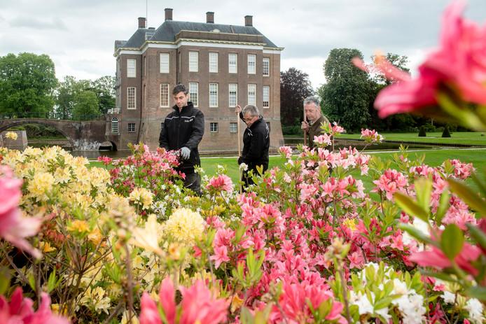 Bloeiende azalea's op Landgoed Middachten in De Steeg.