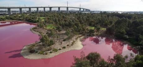 Australisch meer tijdelijk roze gekleurd