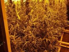Hennepkwekerij met 584 planten opgerold in Hattemerbroek