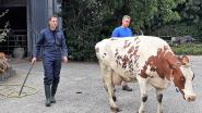 Minister Alexander De Croo halve dag landbouwer op de hoeve De Clercq