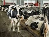 Gelderse politici overwegen gedwongen uitkoop  'piekbelasters' bij natuur, boeren zijn tegen