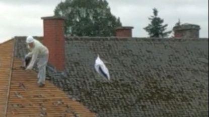 Ex-kankerpatiënt kijkt toe hoe dakplaten met mogelijk asbest aan overkant van woning naar beneden worden gegooid