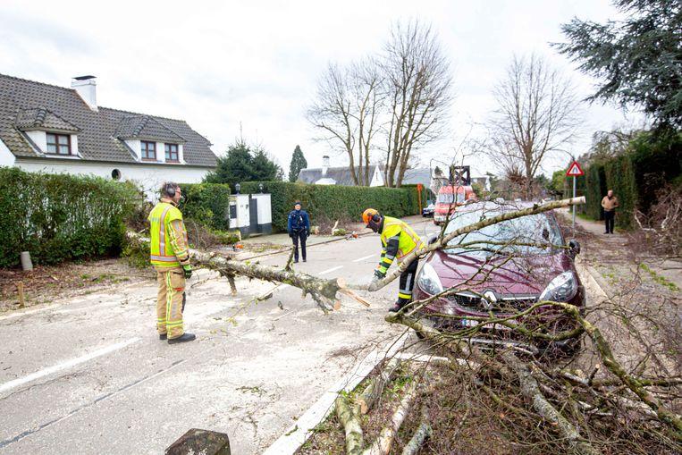 In de Bevrijdingslaan kwam een boom op een geparkeerde auto terecht.