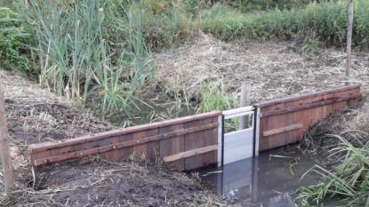 Waterstuw moet vochtig grasland in natuurgebied Meirdam herstellen