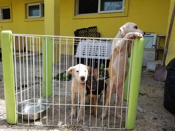 Deze honden van de getroffen dierenopvang overleefden de doortocht van orkaan Dorian.