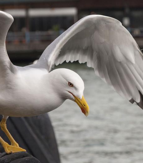 Geld voor kustvogels
