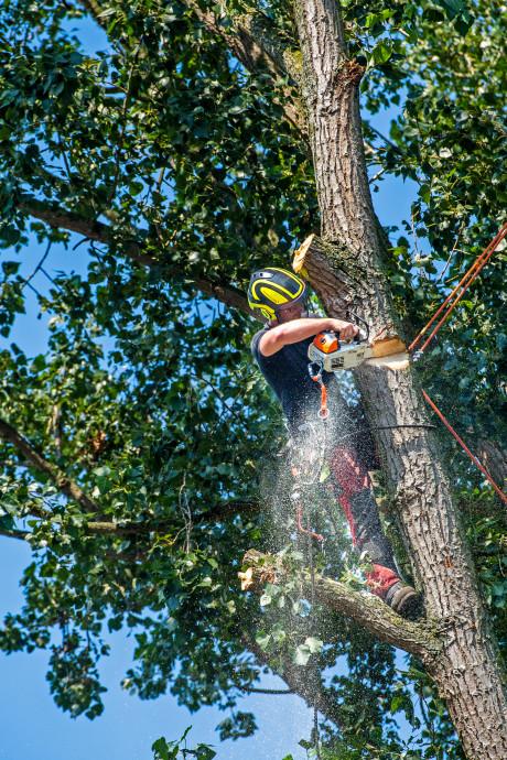 Schimmel leidt tot kap van 125 bomen op de Utrechtse Heuvelrug