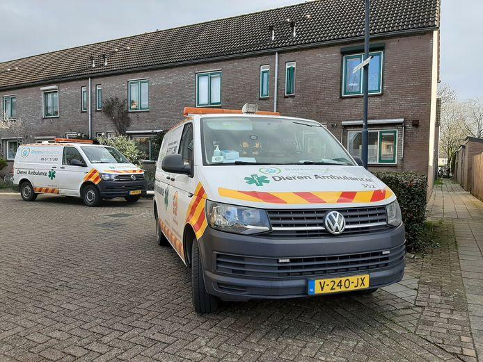 Twee wagens van de Dierenambulance kwamen ter plaatse. Ze parkeerden op de Van Beethovenstraat, omdat ze aan de singel niet met de auto konden komen.